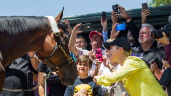 Kentucky Derby: Test Your Horse Race Knowledge