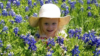 More Bluebonnets in Bloom - April 18, 2016
