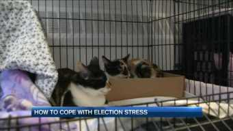 Stressed by the Election? In Maine, There's a Cat for That