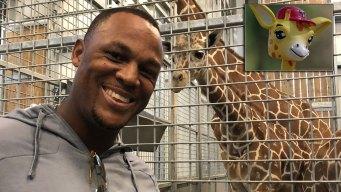 Rangers to Honor Beltre, the Giraffe, With Bobblehead