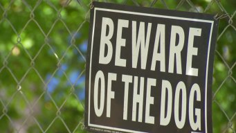 Dogs Tested For Rabies After Dallas Attack
