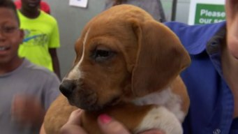 7,000 Pets Adopted, 5 Shelters Cleared, Countless Memories