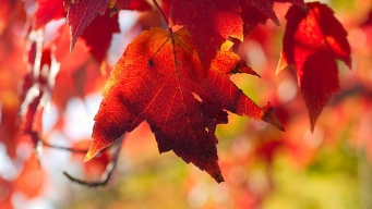 Drought Leads to Early Fall Foliage