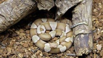 Spring in Texas Means Snakes Ending Hibernation