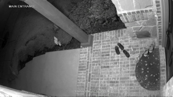 Watch: Coyote Swipes Shoe from Front Porch