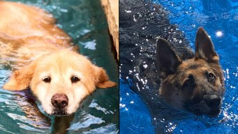 Dog Days of Summer - Chloe and Sofie