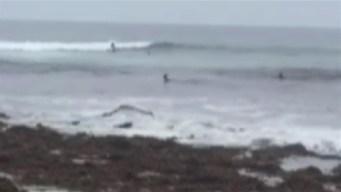 Deer Interrupts Surfing Tryouts in California