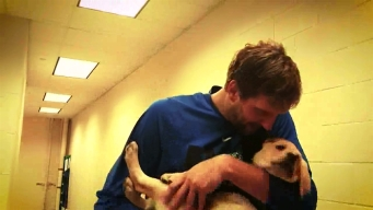 Dirk Nowitzki Meets 'Swish' the Guide-Dog-in-Training