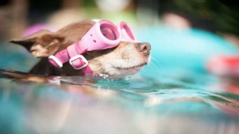Dog Days of Summer - June 21, 2016