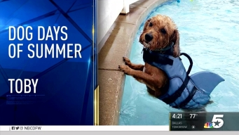 Dog Days of Summer - Aug. 22, 2016