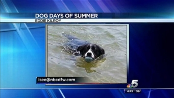 Dog Days of Summer - July 30, 2013