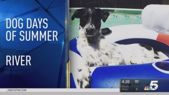 Dog Days of Summer - Aug. 23, 2016