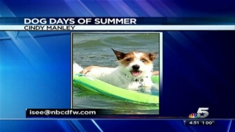 Dog Days of Summer - August 1, 2013
