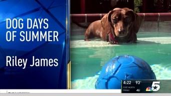 Dog Days of Summer - August 31, 2016
