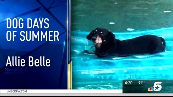 Dog Days of Summer - August 24, 2016
