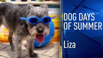 Dog Days of Summer - July 25, 2017