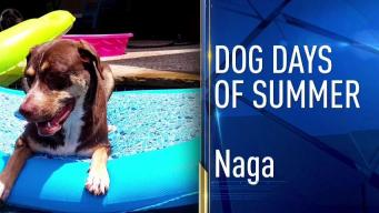 Dog Days of Summer - June 27, 2017