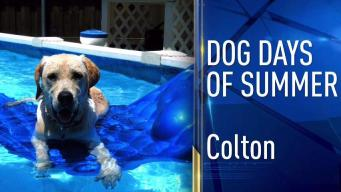 Dog Days of Summer - July 24, 2017
