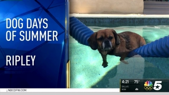 Dog Days of Summer - Aug. 15, 2016
