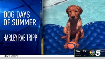 Dog Days of Summer - Aug. 11, 2016