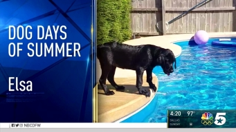 Dog Days of Summer - Aug. 4 2016