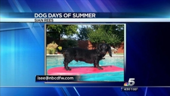 Video: Dog Days of Summer - July 31, 2013