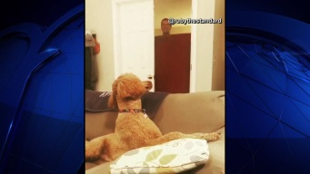 Dog's Mind Blown After Owner Disappears