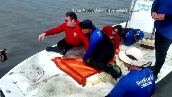 Dolphin Rescued Near Port Aransas, Texas