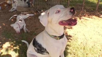 North Texas Farm Gives Animals a Second Chance