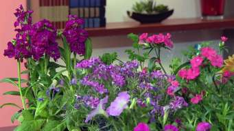 Dotty Shares Tips for Spring Flowers