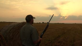 Kicking Off Longest Dove Hunting Season in Decades