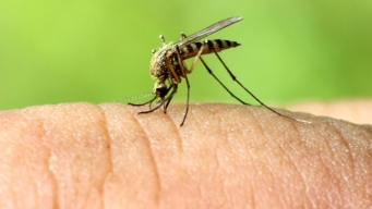Dallas Co. Records 17th Human Case of West Nile