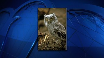 Fort Worth Man Pleads Guilty to Possessing Owl