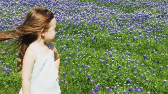 Bluebonnets Have Blossomed in North Texas