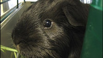 University of Texas Fined for Treatment of Research Animals