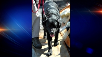 Flower Mound Gets New Arson Detection Dog