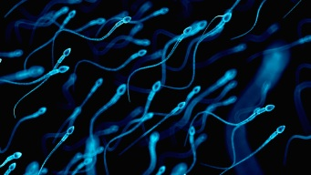 Plunging Sperm Counts Called a 'Major Public Health' Crisis