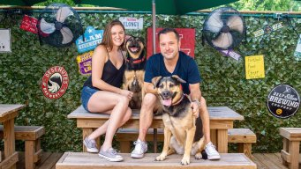 Houston Bar Owners Launch a Line of Beer for Dogs