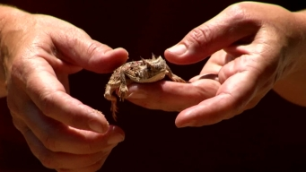Web Extra: Fort Worth Zoo Horned Lizard Program