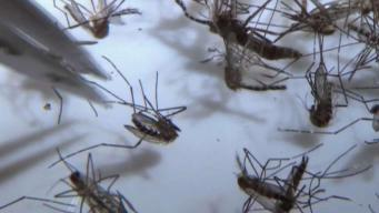 Baylor Faculty Do Mosquito Research