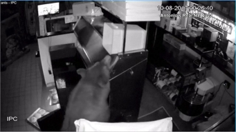 Mama Bear and Cubs Break Into Pizzeria
