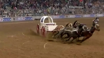 Man Nearly Runover By Horses During Rodeo