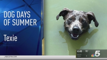 More Dog Days of Summer - August 24, 2016