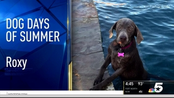 More Dog Days of Summer - August 25, 2016