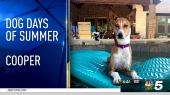 More Dog Days of Summer - Aug. 11, 2016