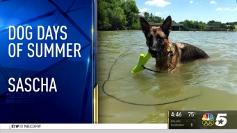 More Dog Days of Summer - Aug. 15, 2016
