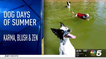 More Dog Days of Summer - Aug. 8, 2016