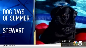 Dog Days of Summer - August 16, 2016
