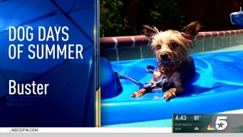 More Dog Days of Summer - August 29, 2016