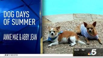 More Dog Days of Summer - Sept. 1, 2016
